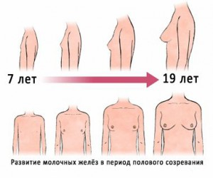 Развитие груди у девочек